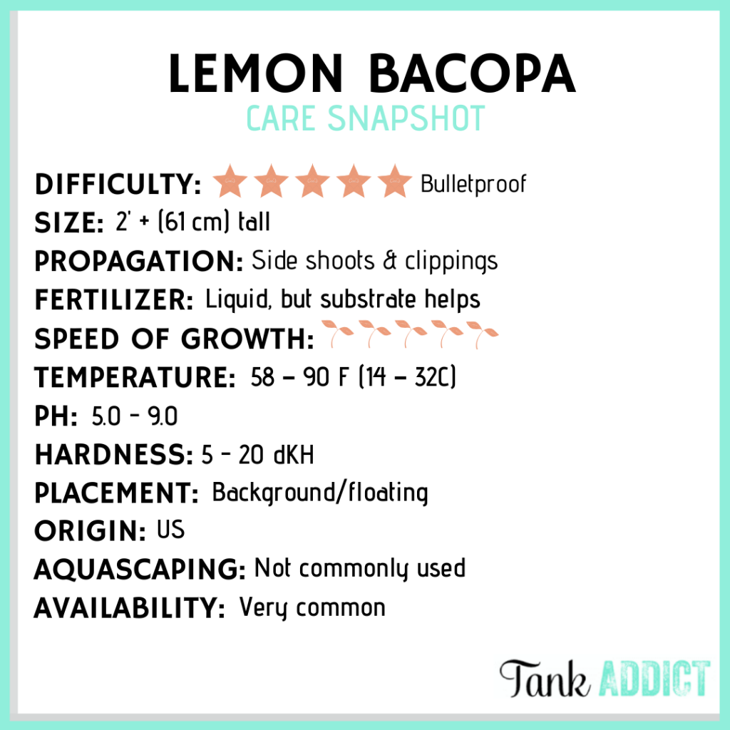 lemon bacopa care