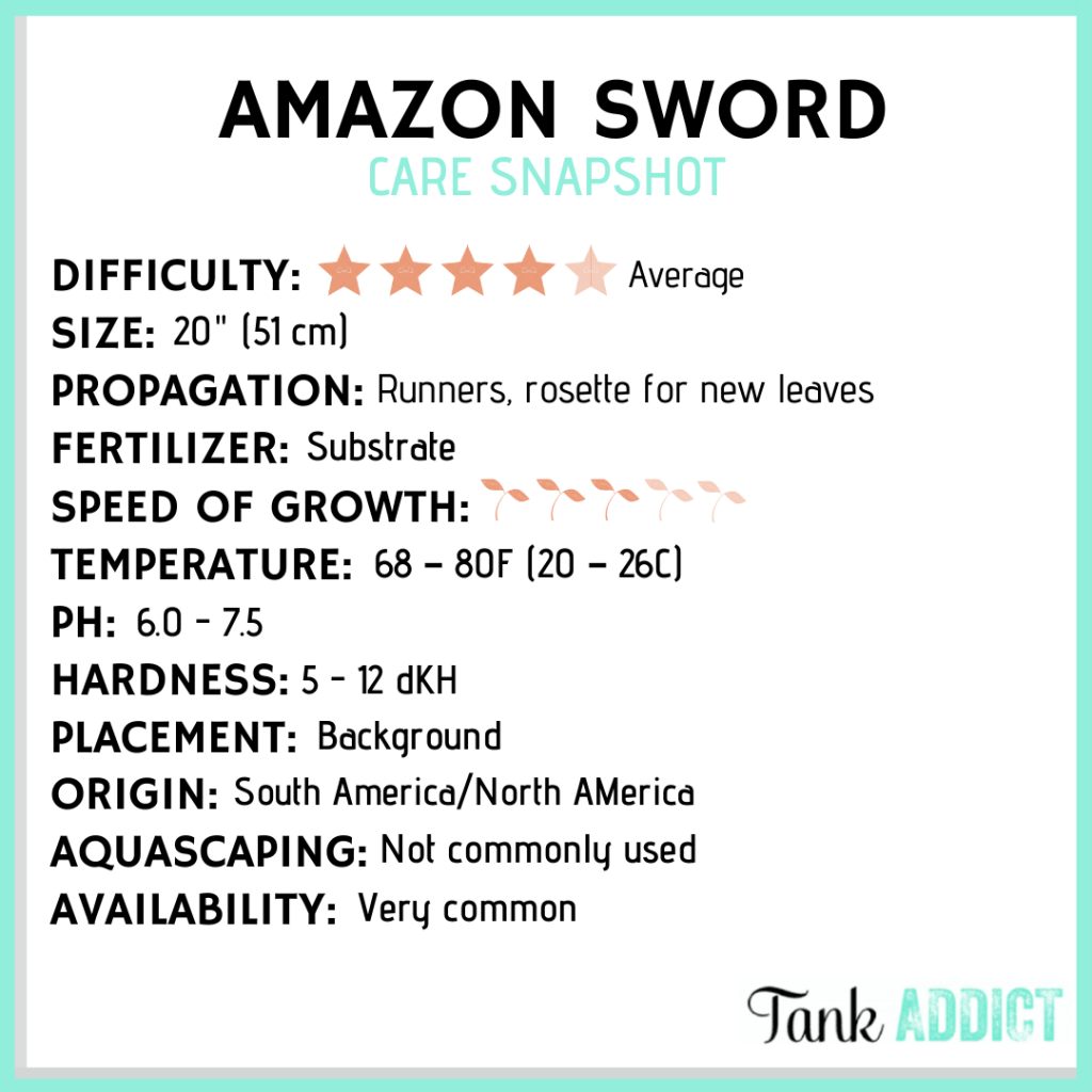 caring for amazon swords