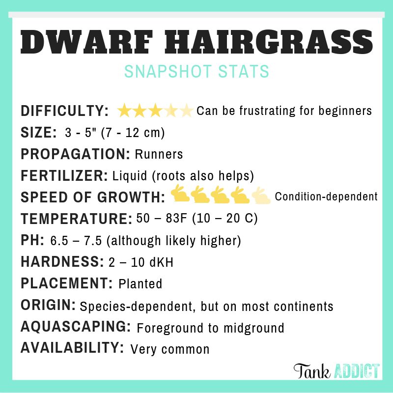 dwarf hairgrass species card