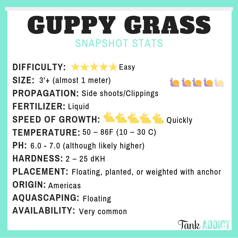 Guppy grass species card