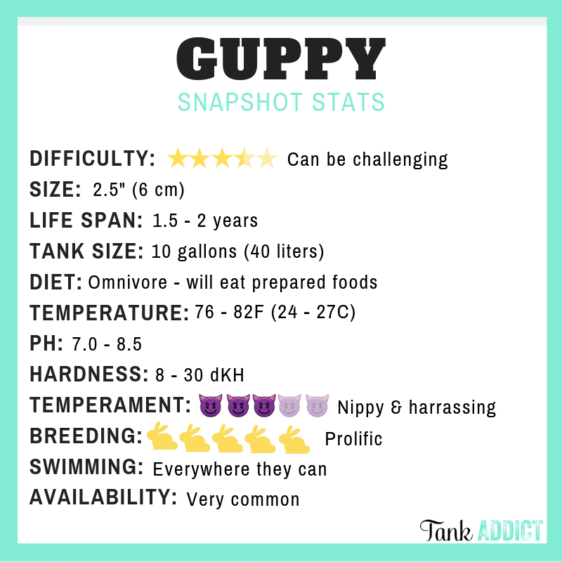 Guppy Species Card